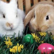 Il nostro menù di Pasqua