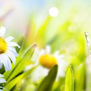 Primavera in agriturismo